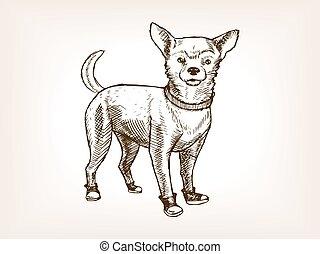 chihuahua, schizzo, vettore, cane, illustrazione