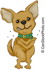 Chihuahua Scratching with Clipping Path