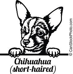 Chihuahua short-haired Peeking Dog - head isolated on white - vector stock