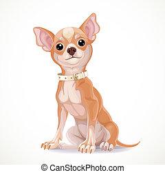 chihuahua, vecteur, collier, asseoir, isolé, mignon, peu, fond blanc, chien, illustration, porter