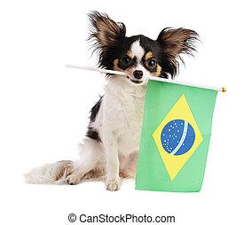 Chihuahua with a Brazilian flag