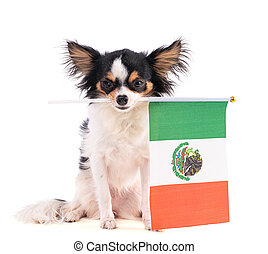 Chihuahua with a flag of Mexico