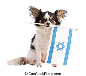 Chihuahua with a Israeli flag