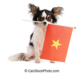 Chihuahua with a Vietnamese flag