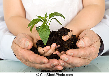 Child and adult hands holding new plant with soil