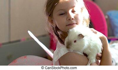Child blue eyes blond girl holding her guinea pig pet animal...