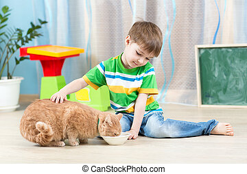child boy feeding red cat