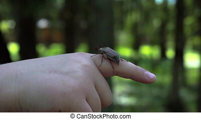 Child boy hold maybug in his hand. Macro shot of the chafer or cockchafer. Slow-mo