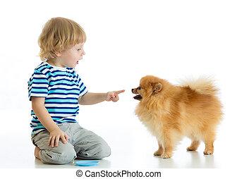 Child boy training Spitz dog. Isolated on white background.