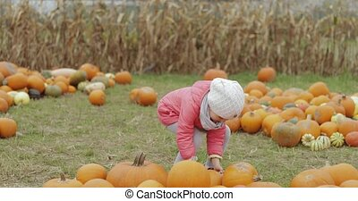 Child collecting pumpkins in yard - Little girl wearing warm...