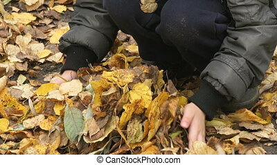 Child collects your hands yellow autumn foliage - Little...