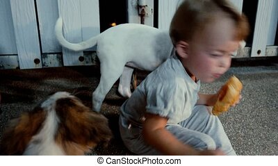 Child eating bun and playing with dogs - Dogs are trying to...