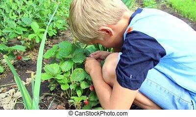child eating fresh garden berries