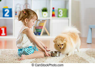 child feeding dog - Child feeding pomeranian Spitz dog at...