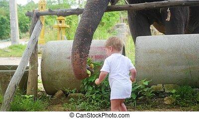 child feeding the elephant bananas. PHANGAN, THAILAND.