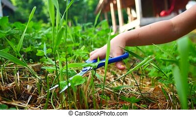 Child girl cutting grass on a lawn with scissors.