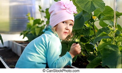 Child girl eats a cucumber in a greenhouse. The first crop...