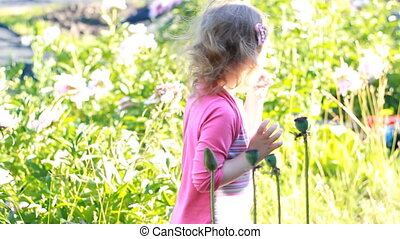 Child girl looks and touches poppy seeds in the garden.