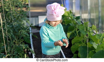 Child girl show and eats a cucumber in a greenhouse. The...