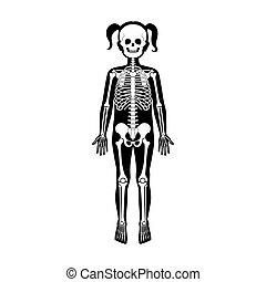 Child girl skeleton anatomy