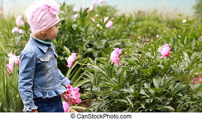 Child girl smells the aroma of peony flowers. The kid walks in the garden