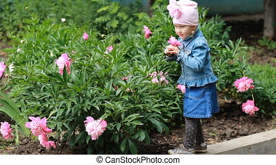 Child girl sniffs the aroma of peony flowers. Baby walks in the garden with peonies.
