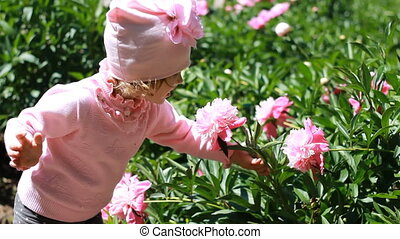 Child girl sniffs the aroma of peony flowers. Baby walks in the garden with peonies