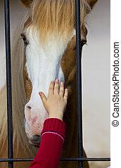 child hand stroke horse in captivity