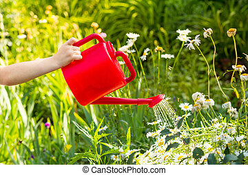 Child hand watering a plant with watering can.