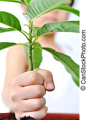 child, hand with green plant isolated on white, green concept