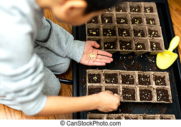Child hands planting seeds into fertile soil in germination tray.