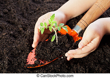 Child hands protecting seedling - Child hands protecting...
