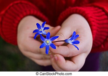 Child hands with snowdrops