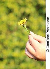 Child Holding Dandelion Flower