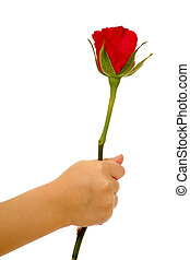 Child holding rose flower in hand on white background