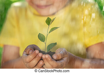 Child holding young green plant in hands
