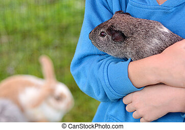 Child holds Guinea pig in animals farm.