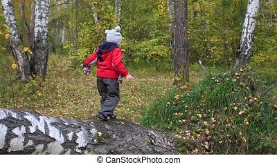 Child in autumn Park having fun playing and laughing , walking in the fresh air. Fallen tree. A beautiful scenic place