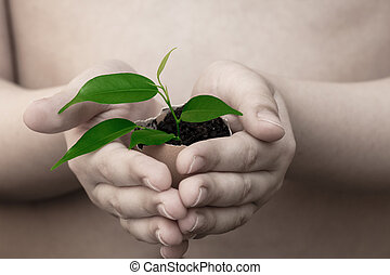 child in hands holds a plant