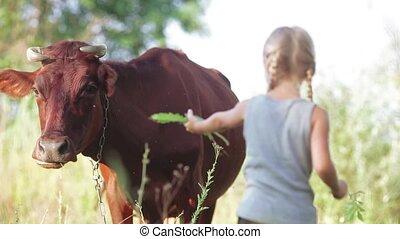 Child is feeding a cow