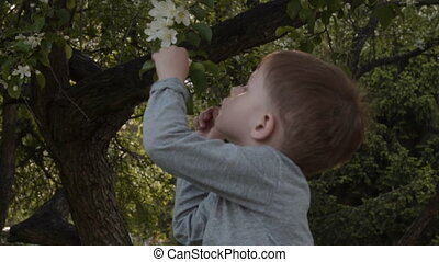 Child picking up apple tree flower