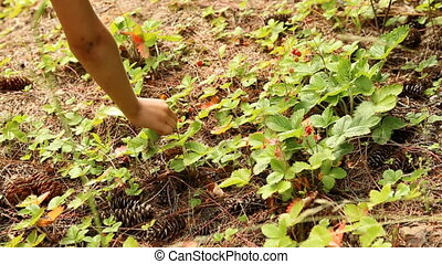 Child picking wild strawberries in the forest