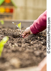 Child planting a seedling into a fertile soil