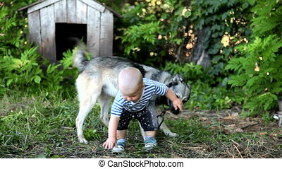 child playing with a dog