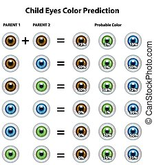 Child Probable Eyes Color Prediction Table