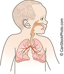 Child Respiratory Scheme - Vector Illustration of a Child...