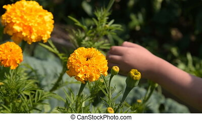 Child smelling flower in the garden