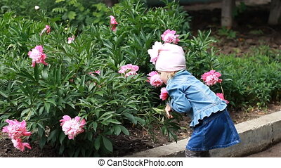 Child tries to tear a peony flower in the garden