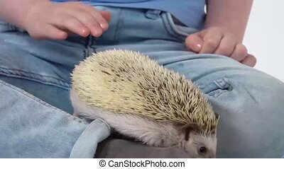 Child with hedgehog at white background. Kid in blue jeans. Curious hedgehog is sniffing at studio. Close up. Slow motion