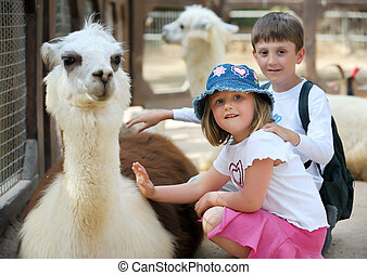 Children and animals in the zoo - Boy and girl palm a young...